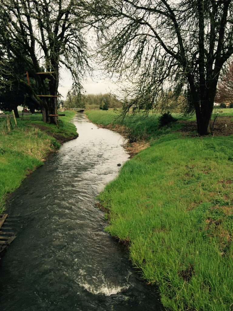 Flat Creek, Junction City, OR